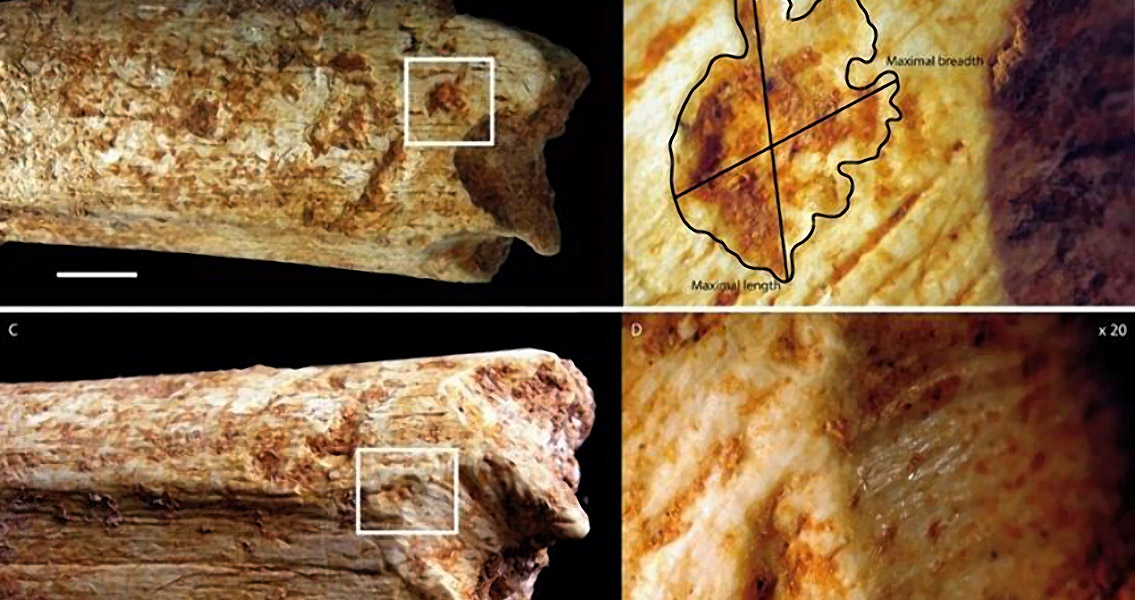 Large Carnivores May Have Eaten Ancient Hominins