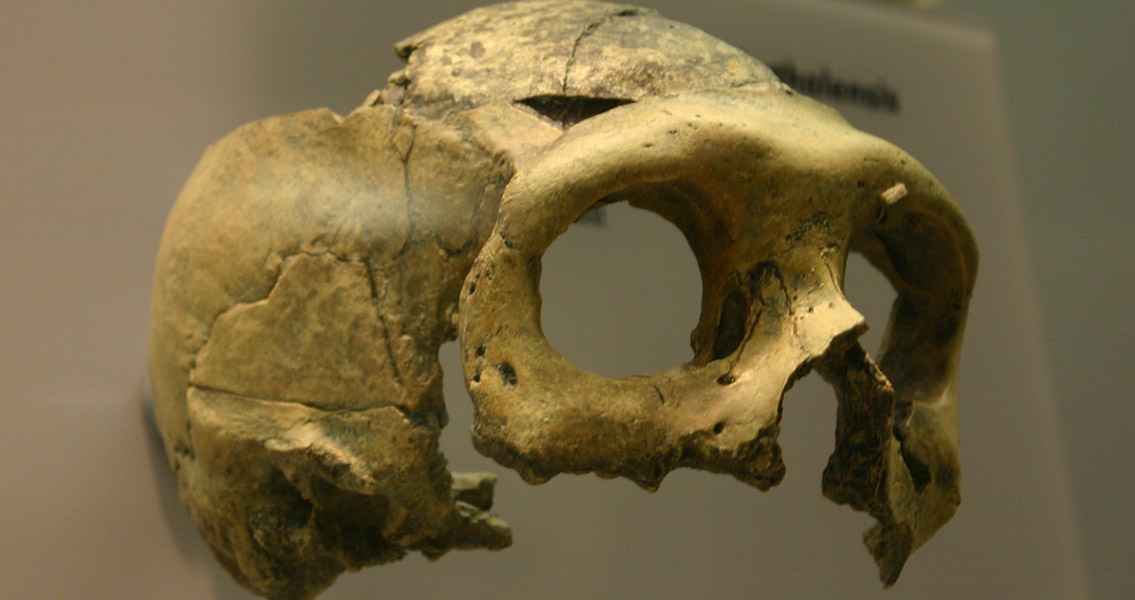 Did Climate Change Contribute to Demise of Neanderthals?
