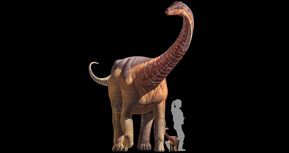 Infant Titanosaur Fossil Reveals Early Dinosaur Life