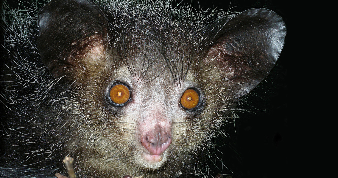 Answered: How Early Mammals Developed Night Vision