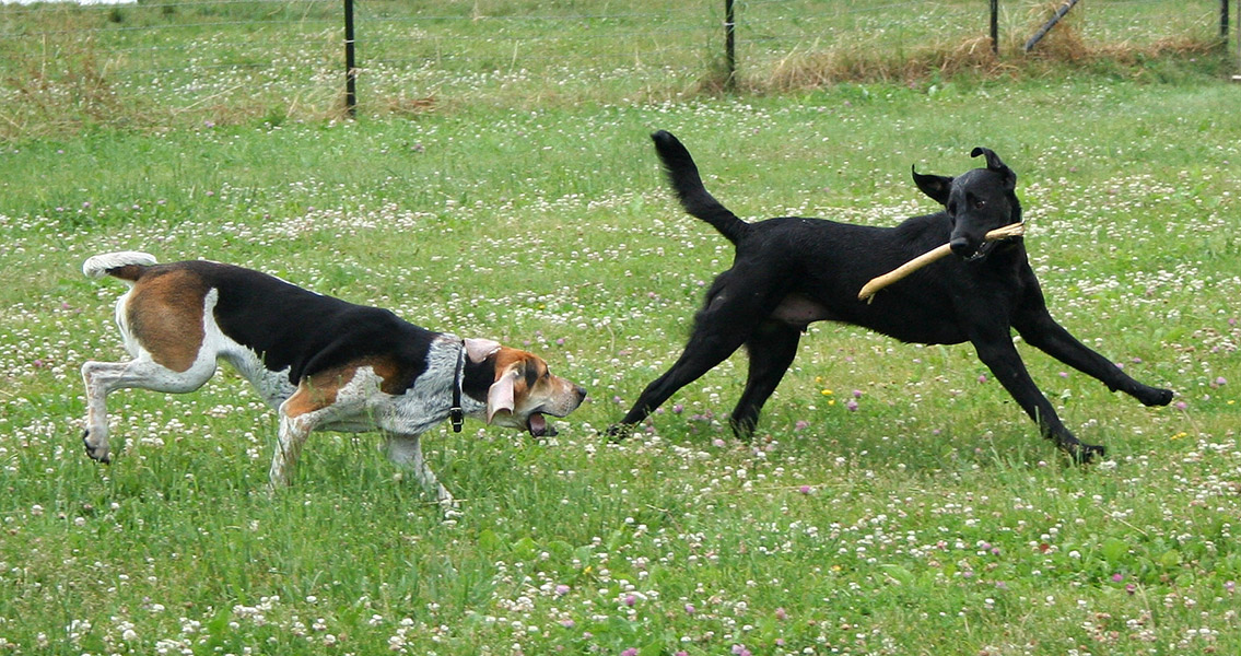 Genetic Tests Suggest Dogs Domesticated More Than Once