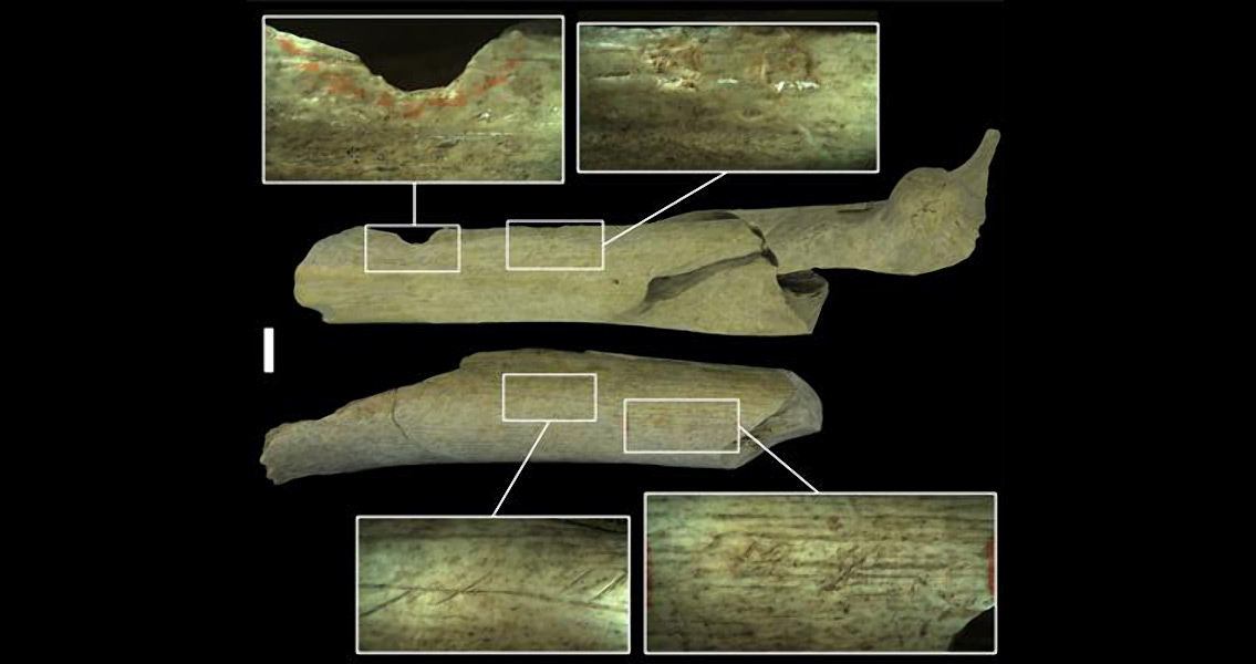 New Evidence of Neanderthal Cannibalism Found in Belgium