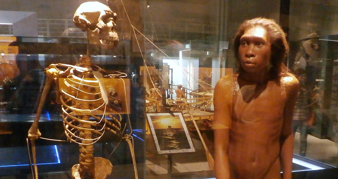 Skeleton and restoration model of Turkana boy