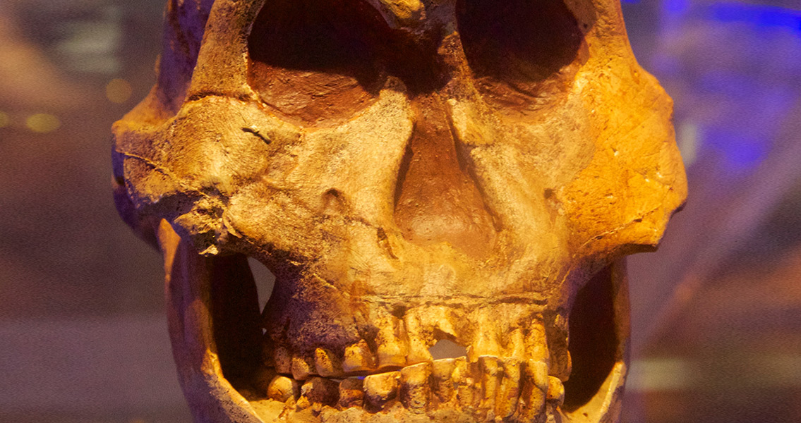New Research Uncovers Prehistoric Use of Cannabis