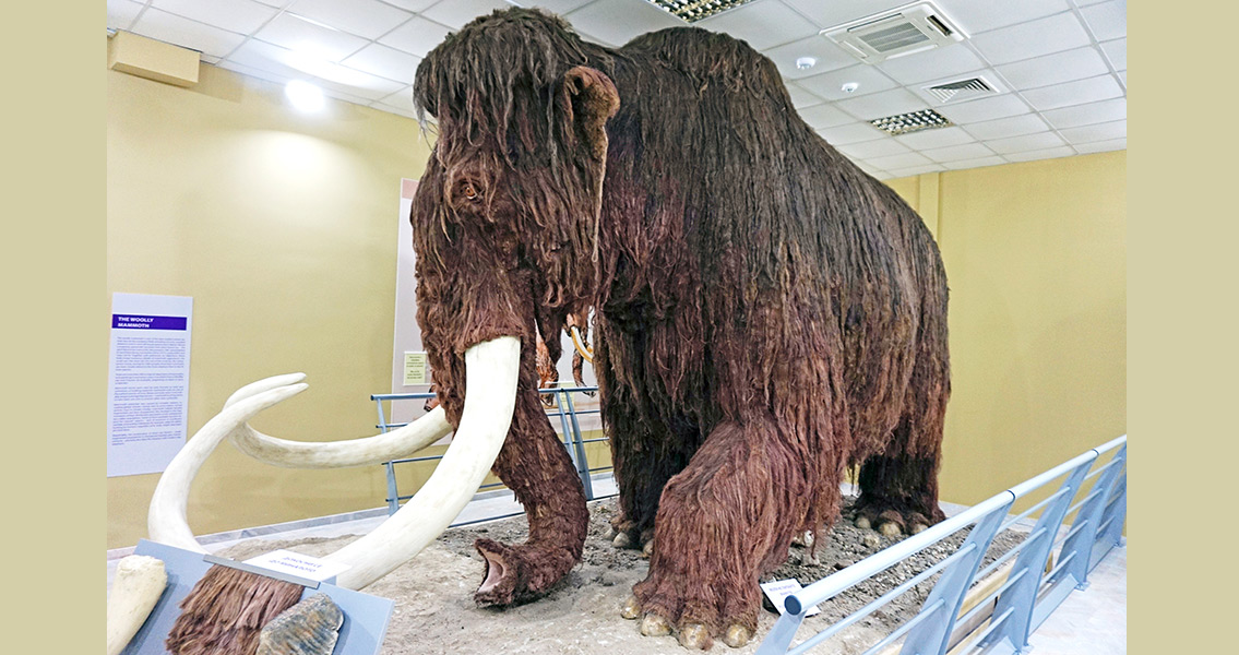 Scientists Get Amazingly Accurate Date for Mammoth Extinction