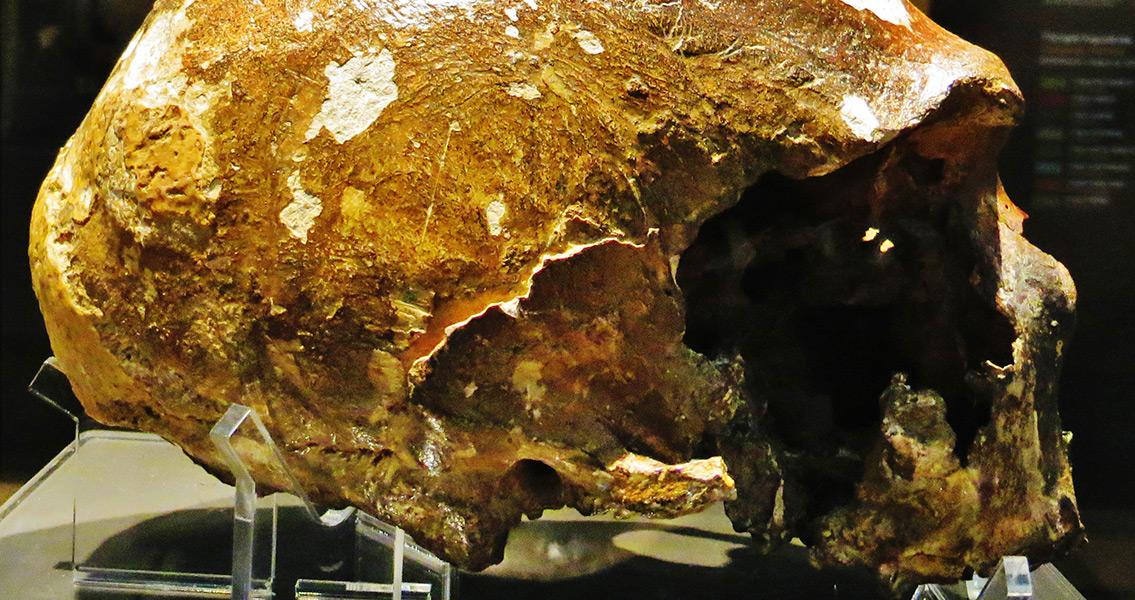 Could Neanderthals Speak Like Modern Humans?