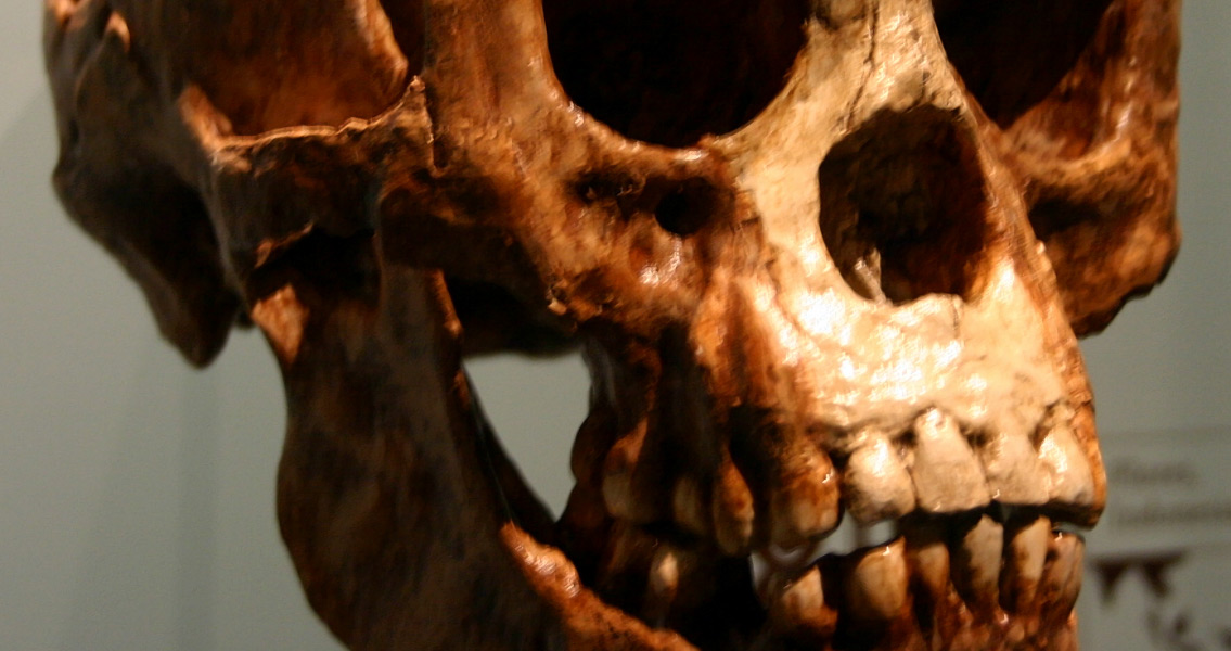 New Carbon Dating May Tie Early Humans to Hobbits' Extinction