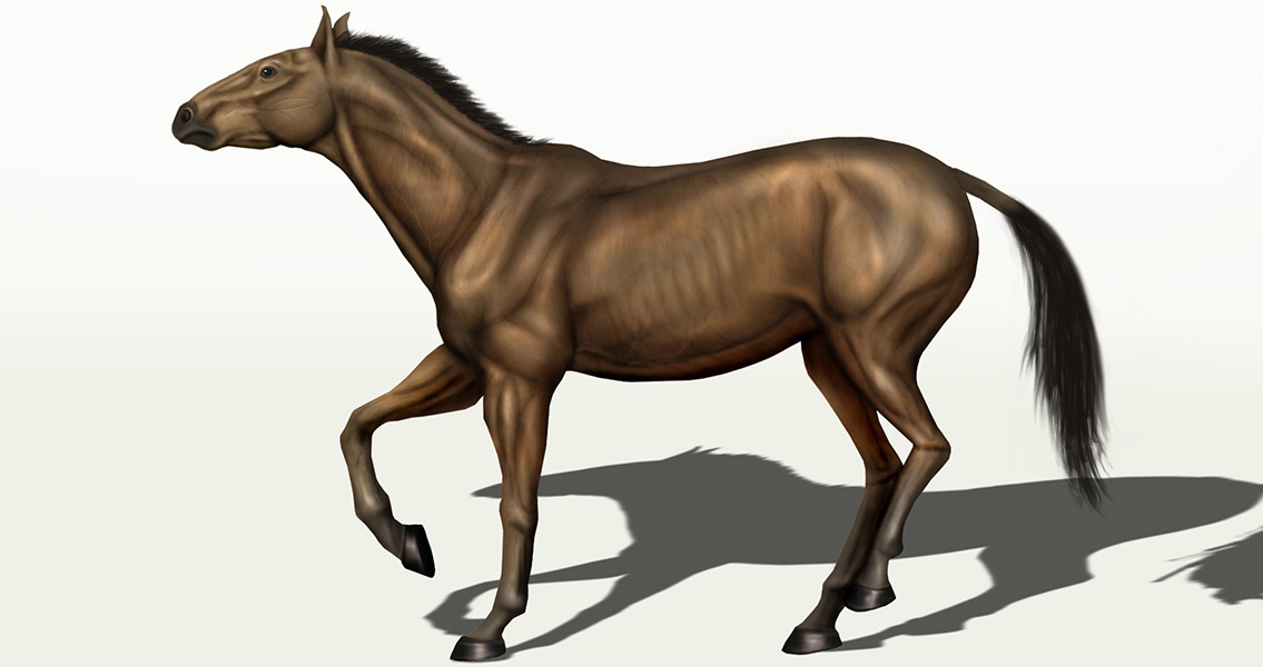 Researchers Place Extinct Horse with Humans in Oregon