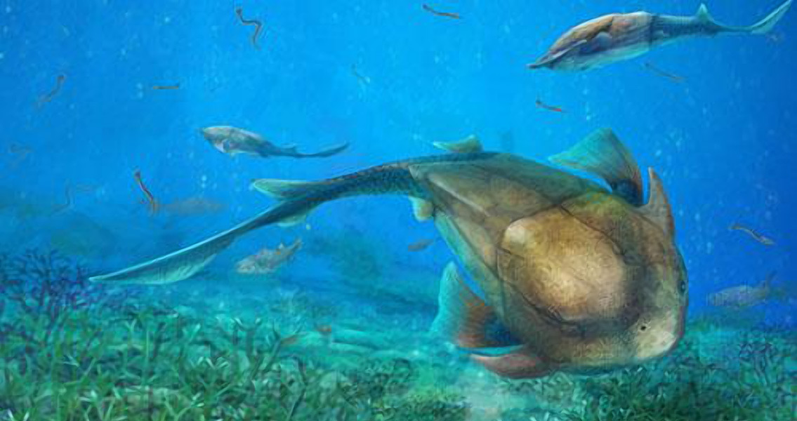 Chinese Fossilized Fish Sheds New Light on Jaw Evolution