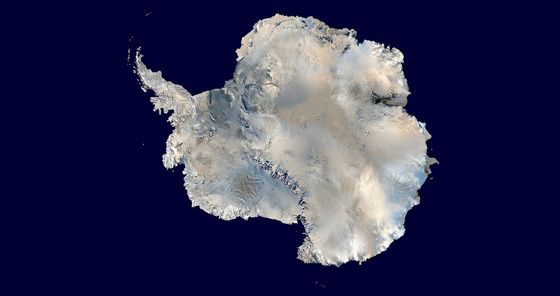 New Research Reveals Existence of Ancient Antarctic Beetles