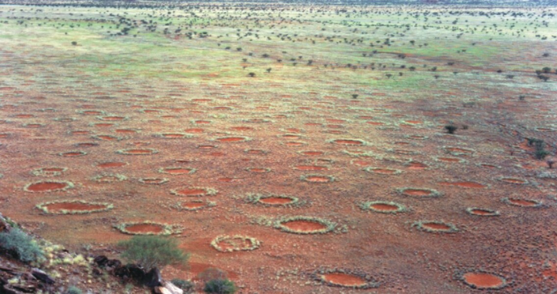 Termites, not a God, Created Africa's Fairy Circles