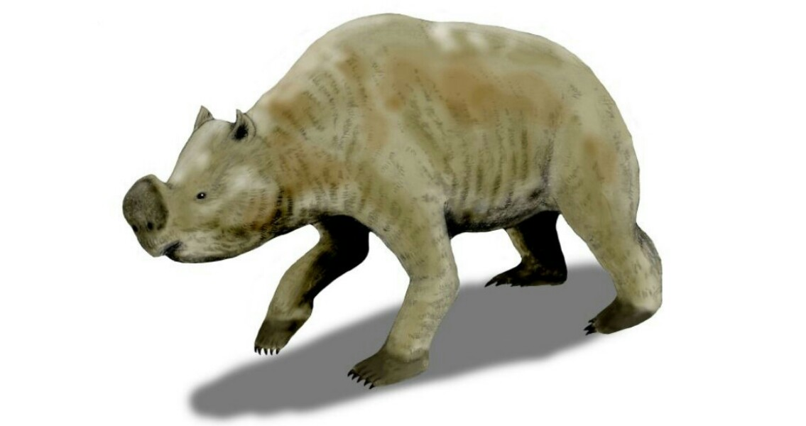 New Research Reveals Australian Megafauna Coexisted with People