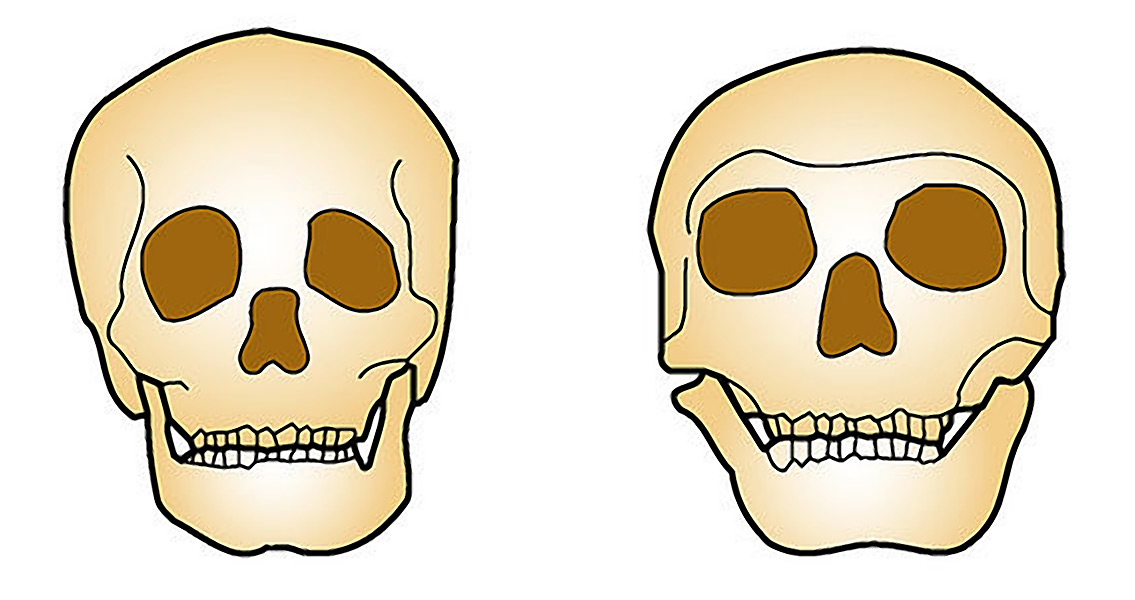 Neanderthals and Humans – What Are the Differences?