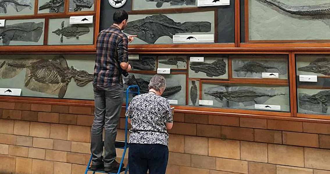 Ichthyosaur Mystery Finally Solved As Two Become One