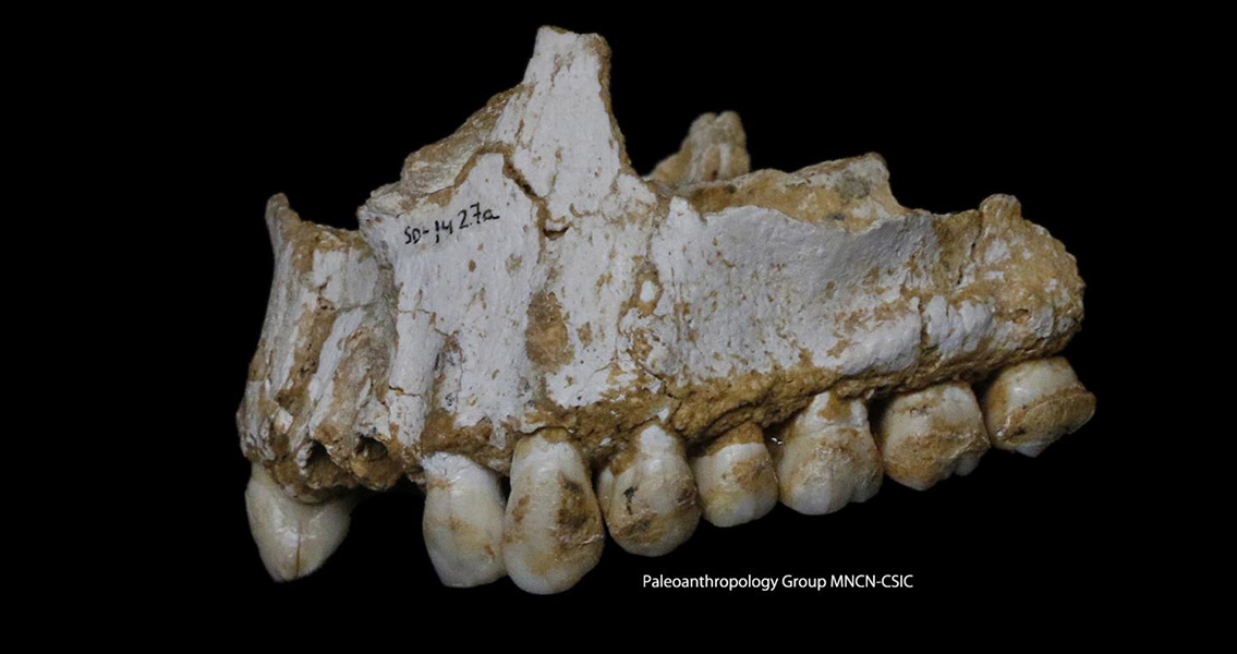 Neanderthals Used Plant-Based Medicine, Says New DNA Study