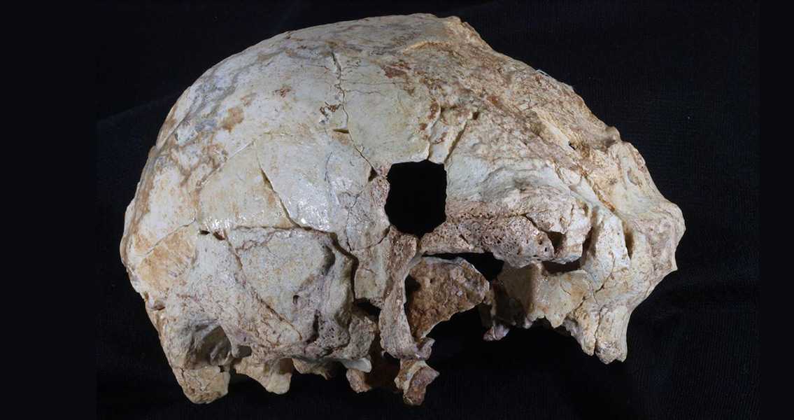 Rare 400,000 Year Old Skull Discovered in Portuguese Cave