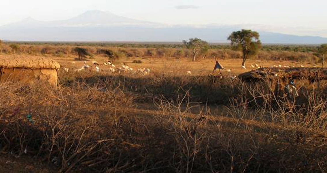 Proliferation of Common Mouse Linked to Human Settlement
