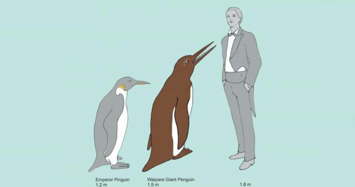 Giant Penguin Might Have Been Around With the Dinosaurs