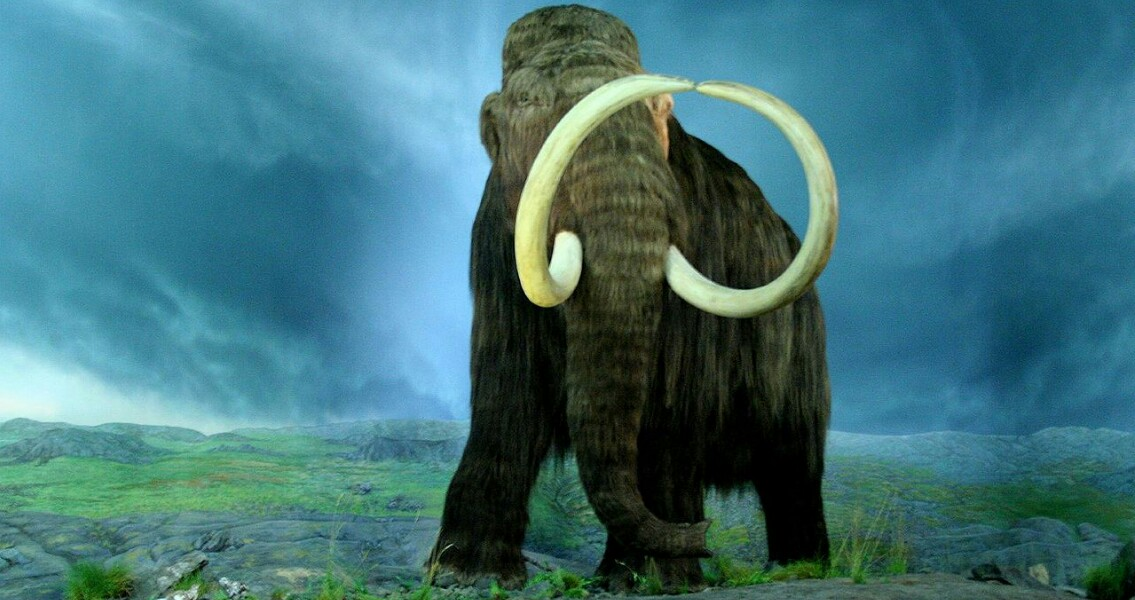 Mammoth Preservation Project Underway in Mexico