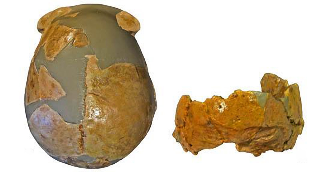 Neanderthal and Human Characteristics Shown in Two Ancient Skulls