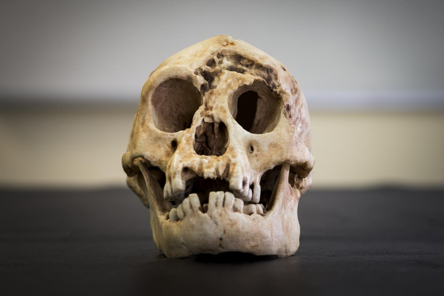 Hobbits of Indonesia Evolved from African Ancestor
