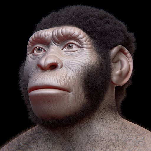 homo_naledi_facial_reconstruction