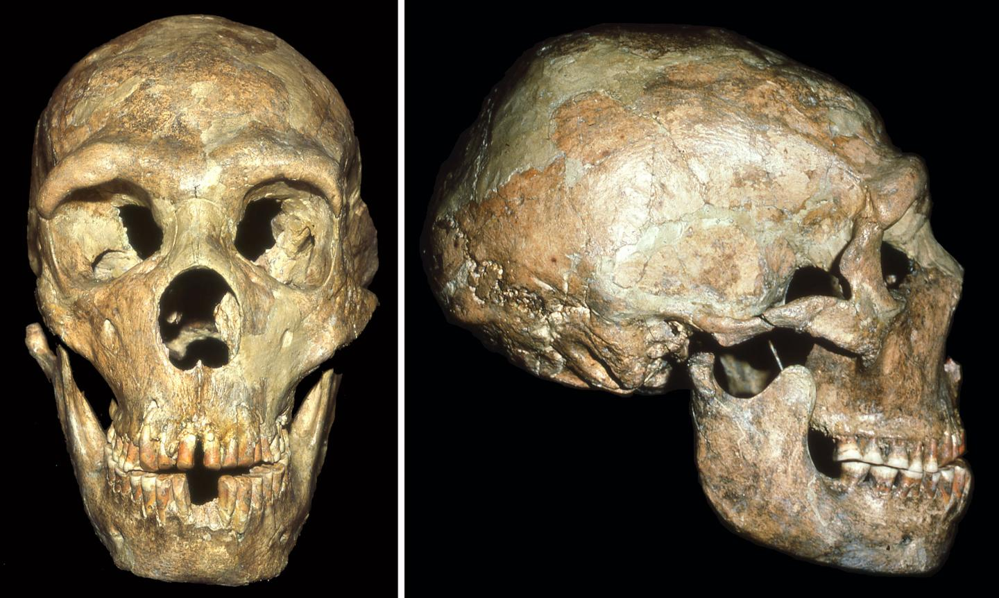 History News of the Week - Neanderthals Showed Compassion