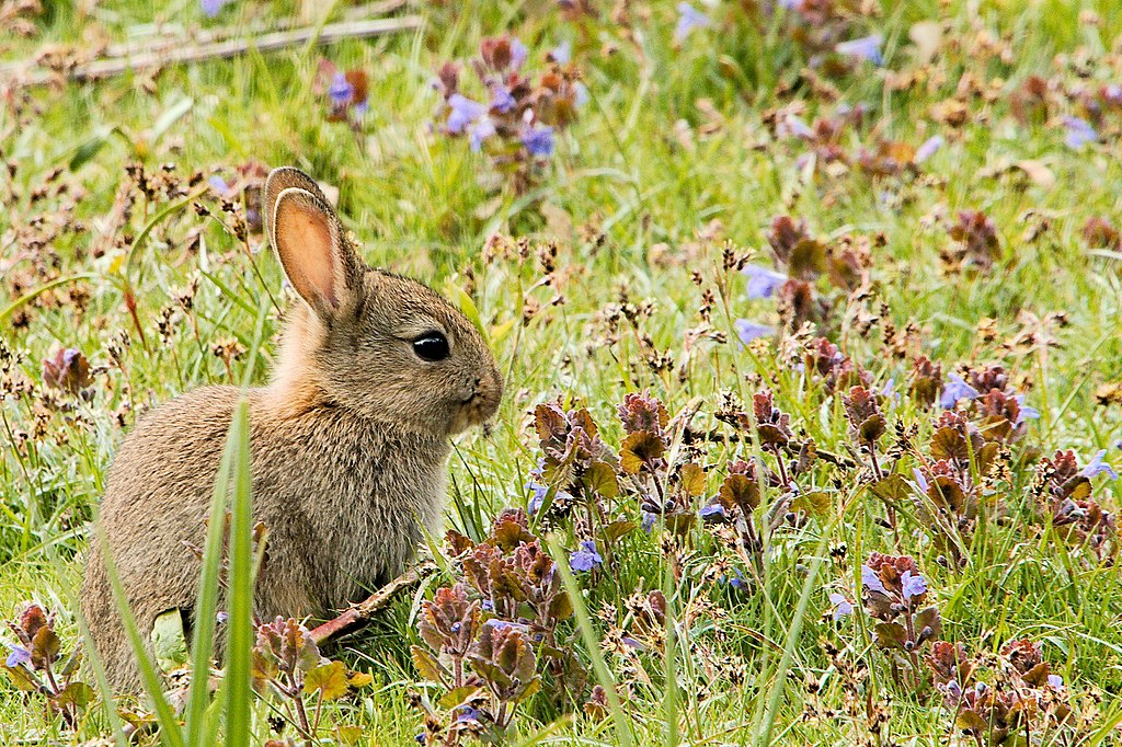 When Were Rabbits Domesticated? – The History News of the Week