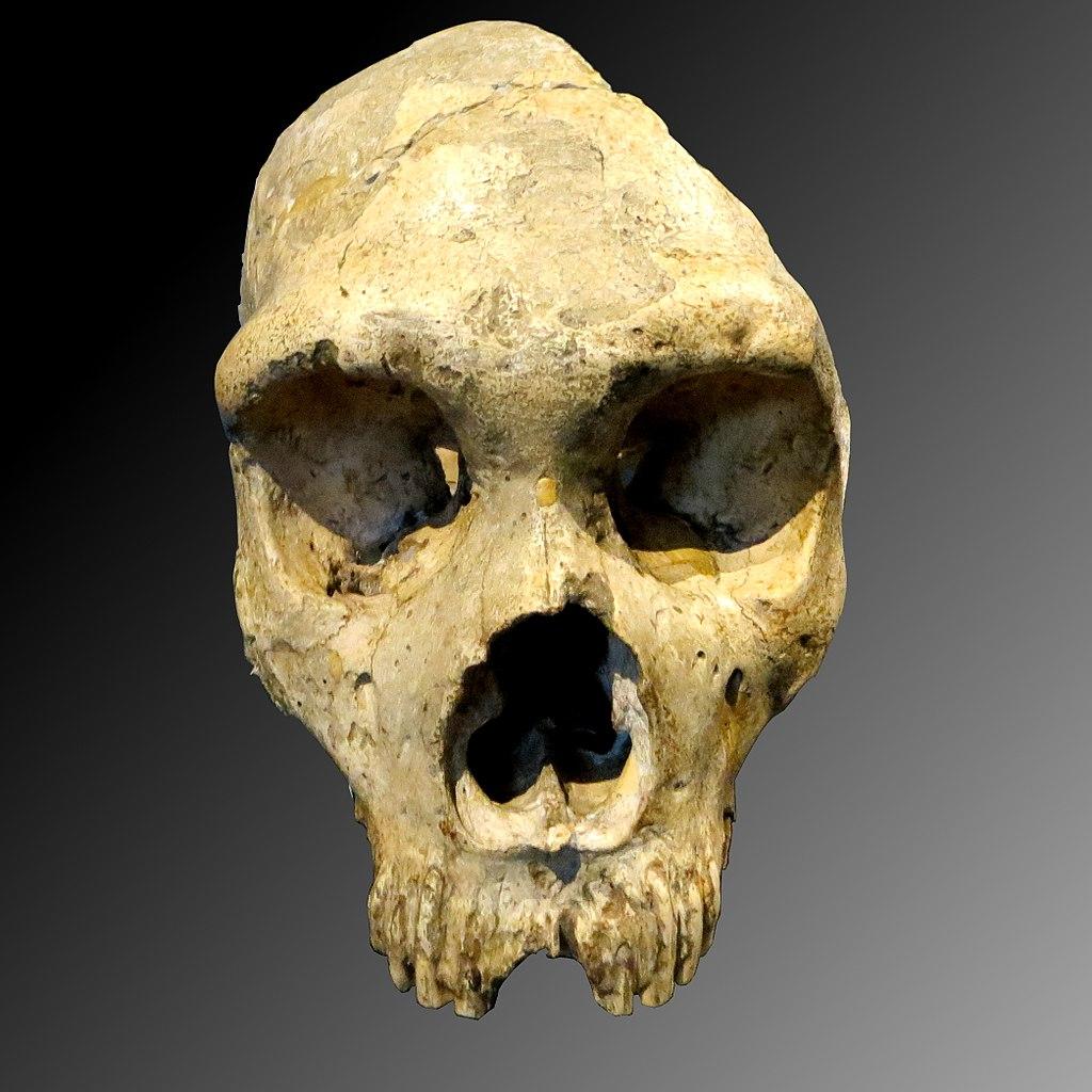1024px-Gibraltar_Skull_(1)a