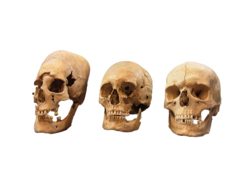 Elongated skulls reveal female-biased immigration to Early Medieval Germany
