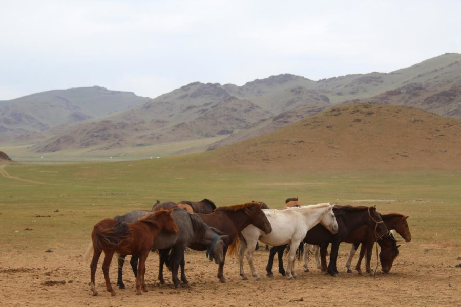 Not Western after all: veterinary science originates from Mongolia